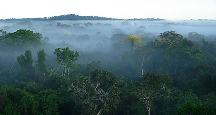 After 300 years, Amazon rainforest tree list nears 12,000 species