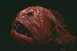 Asian carp in the oceans
