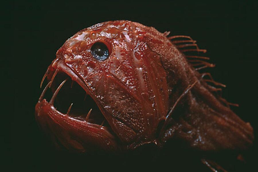The 20 weirdest fish in the ocean