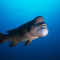 Weird Fish Head 11