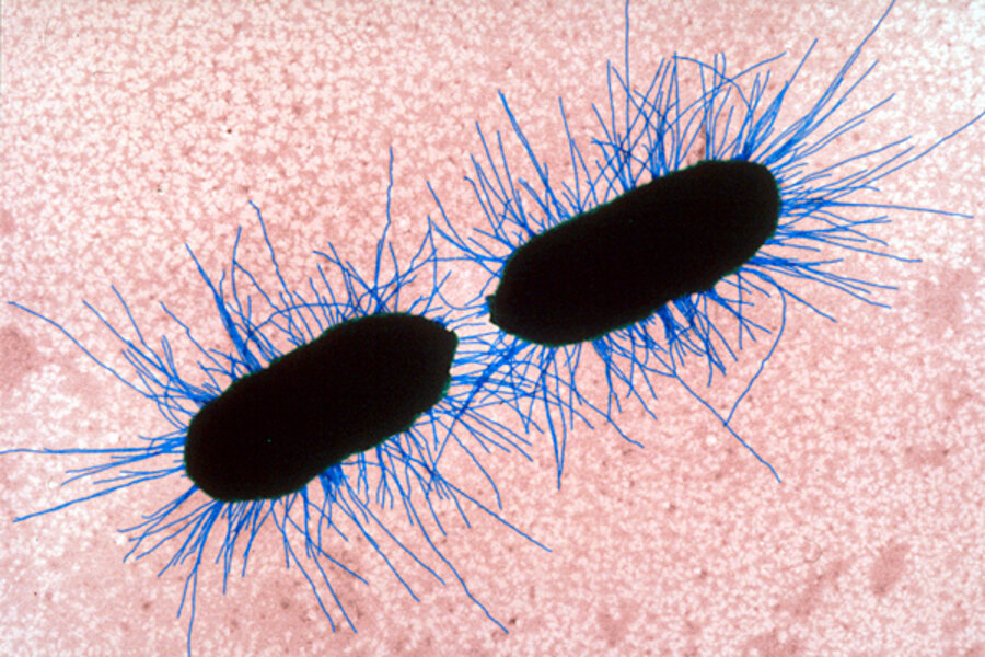 One Celled Organism >> Single Celled Organisms Csmonitor Com