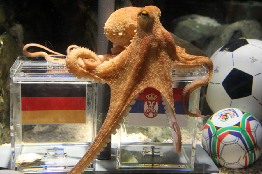 Paul the Octopus predicts World Cup outcomes - CSMonitor.com