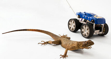 Should we design robots to be more like velociraptors?