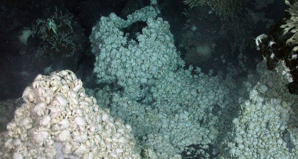 Yeti crabs and ghost octopuses! Antarctic deep-sea vents a trove of new species.