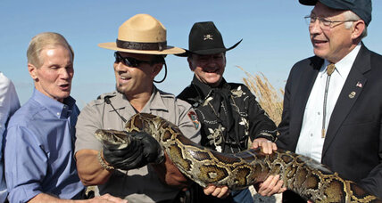 Everglades snakes problematic, so non-native species banned