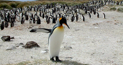 Why all the attention on the Falklands? Five key questions.