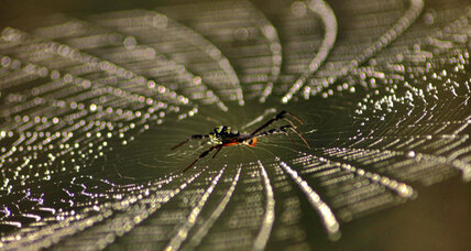 Can a spider web hold clues for better buildings? Science takes a step.