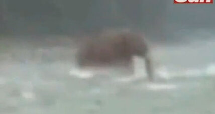Remarkably blurry video captures live 'woolly mammoth'