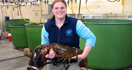 27-pound lobster caught in Maine