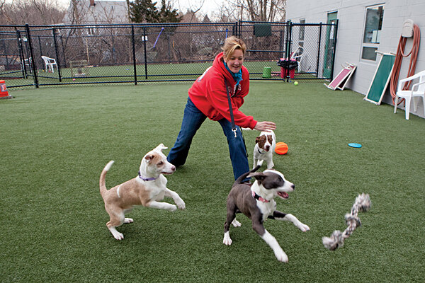 behind the big drop in euthanasia for america s dogs and