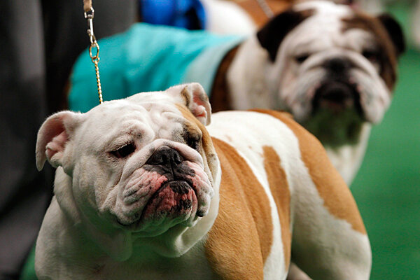 Dog Show Controversy Westminster