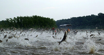Supreme Court rejects Asian carp appeal