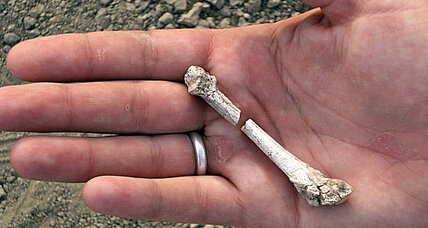Fossil discovery could unravel mystery of how humans learned to walk (+video)