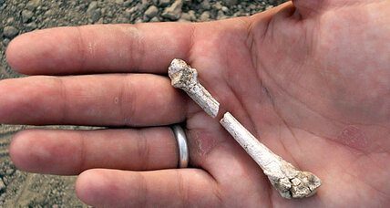 Fossil find sheds light on how humans evolved to walk (+video)