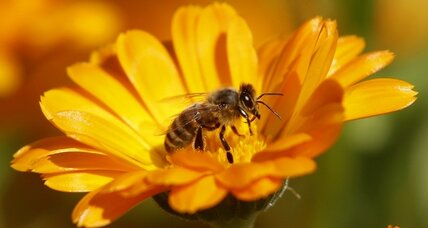 Are pesticides responsible for bee deaths? (+video)
