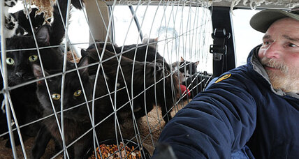 200 cats removed from New York home