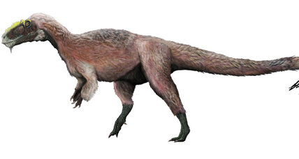 Dressed to kill: A feathered tyrannosaur is discovered in China