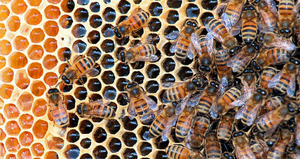 Studies fault Bayer in bee die-off