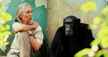 "Jane Goodall: Disney's ""Chimpanzee"" good for nature-starved kids"