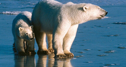 Polar bears emerged far earlier than thought, DNA study indicates (+video)