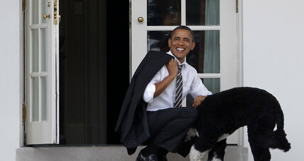 Obama Romney dog wars: cultural lessons for the dinner table