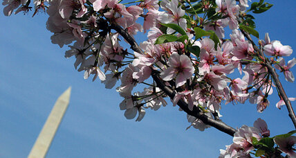 Dogwood diplomacy: US gift of trees to Japan is cherry on top of Okinawa deal (+video)