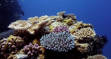 How a bizarre ocean current could create coral refuges (+video)