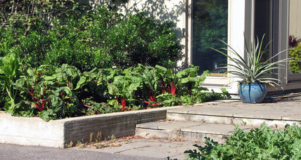 In a hungry world, should edible landscaping do more?