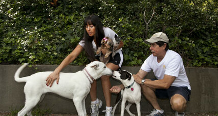 Doggy couch surfing website has in-home vacation lodging for dogs