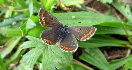 Climate change allows once-rare British butterfly to thrive