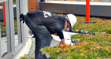 Green roofs in Nairobi save energy, water
