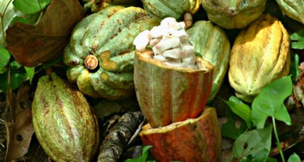 Travel: Eladio Pop's cacao farm in Belize