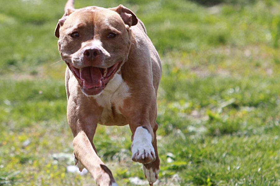 Vicious Dog Breeds Ohio