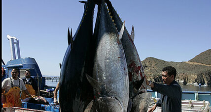 Radioactive tuna travels from Japan to US faster than wind