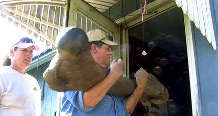 Iowa farmer makes mammoth discovery ... of a mammoth!