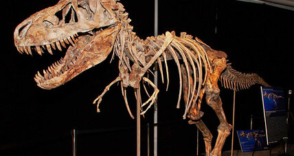 Did someone smuggle a Tyrannosaur skeleton out of Mongolia?