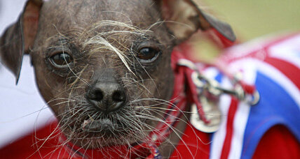 Ugliest Dog contest: 'Mugly' had the name, now he gets the prize