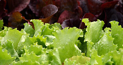 Dole salad recall 2012 hits bagged lettuce at Wal-Mart, Kroger