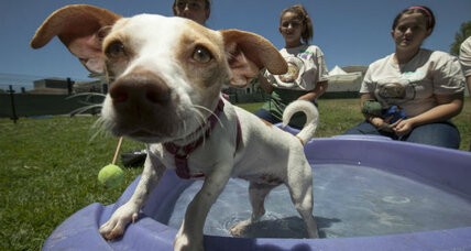 Animal shelters overloaded in summer, but adoptions also go up