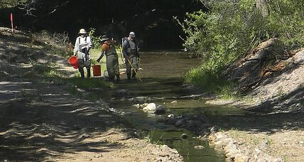Raging NM fire prompts rescue of threatened fish