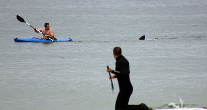 Mass. beach stays open after possible shark attack