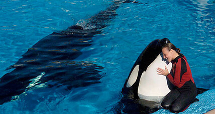 SeaWorld death prompts author to explore whales in captivity