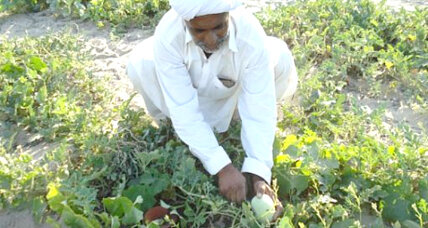 Pitcher irrigation brings vegetables to Pakistani desert