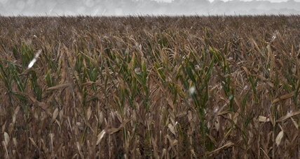 Midwestern drought, election year politics add to pressure on ethanol