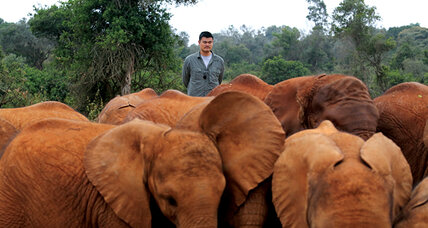 Using Chinese star power to fight ivory poaching in Africa