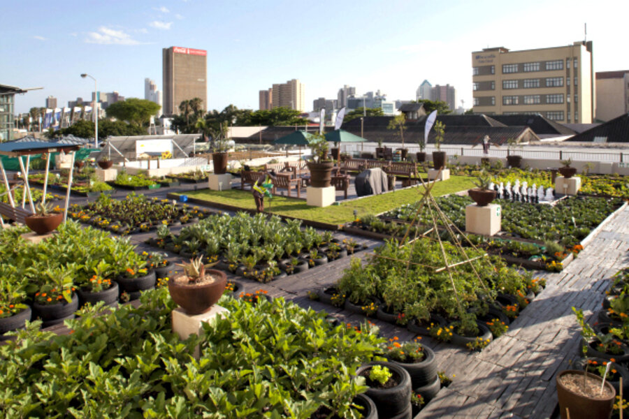an urban gardening project greens johannesburg rooftops. Black Bedroom Furniture Sets. Home Design Ideas