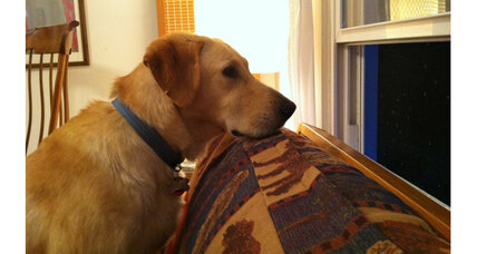 Rescue dog: Getting inside a dog's head and his futon fixation