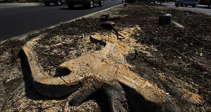 Felled trees make way for space shuttle Endeavour