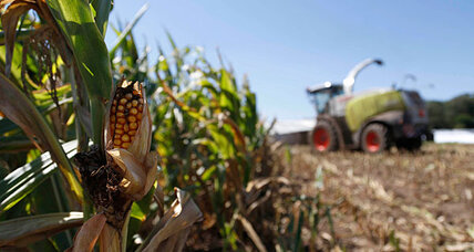 Why Midwest drought could have been much worse for some corn farmers
