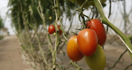 US, Mexico in food fight over tomatoes: How messy will it get?
